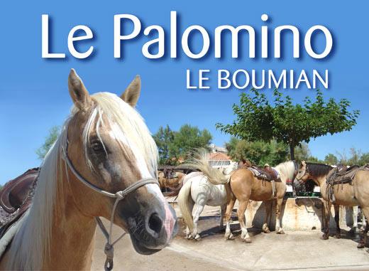 Le palomino promenade cheval aux saintes maries de la - Office du tourisme les saintes maries de la mer ...
