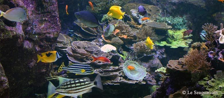 articles aquarium g 233 ant du grau du roi guide tourisme camargue fr