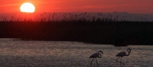 Parc ornithologique de Pont-de-Gau