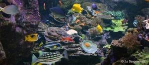 Aquarium géant du Grau-du-Roi