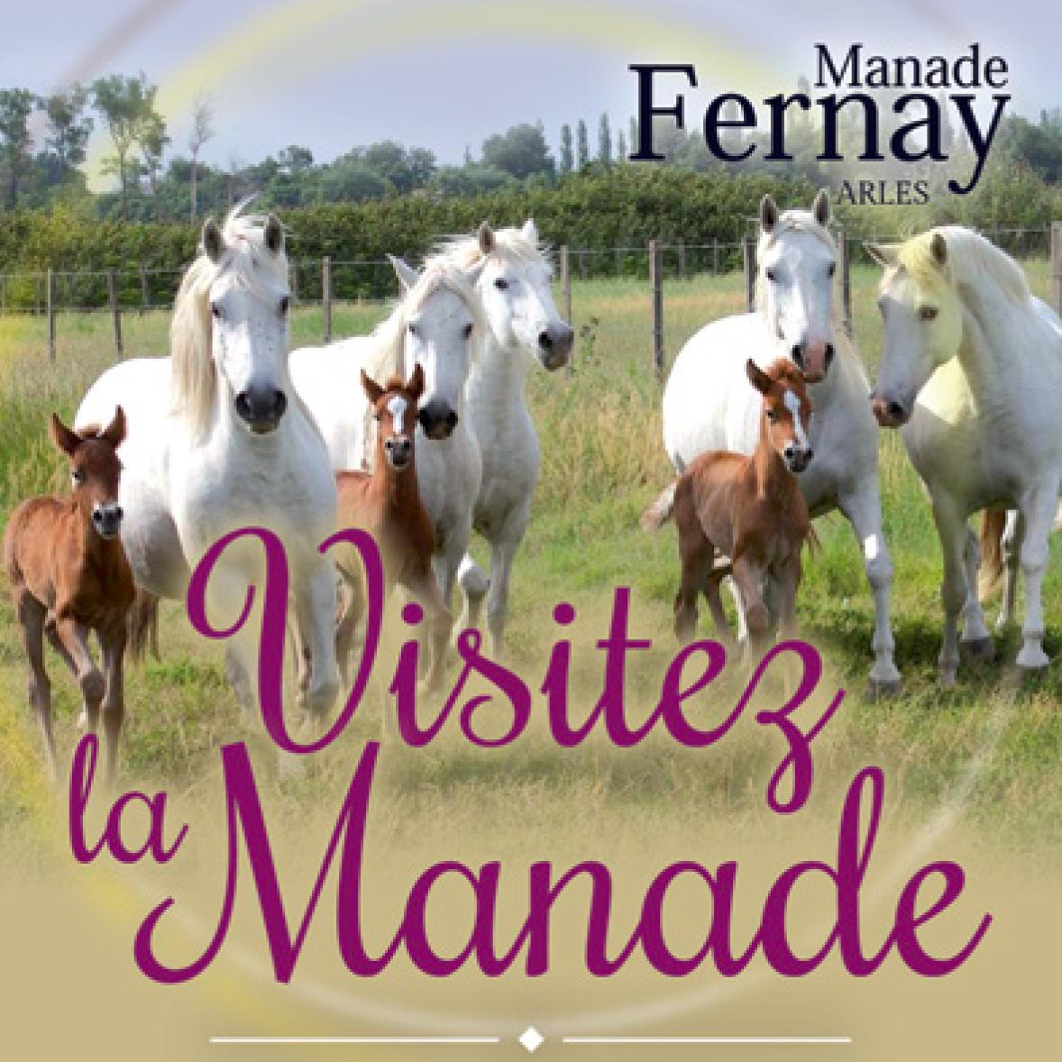 Visite de la Manade Fernay en Charrette c'est du Mardi au Samedi à 18H00 Verre du Gardian Offert !!!