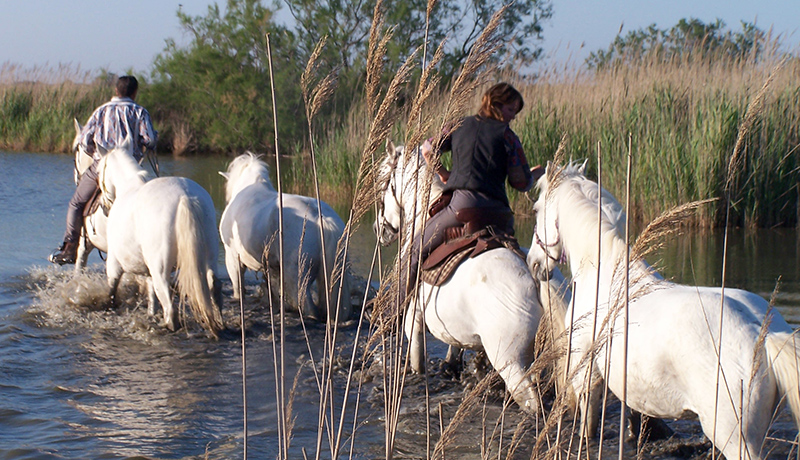 abf7e228ea95 Histoire - Camargue Promenades, balades a cheval, promenade a cheval ...