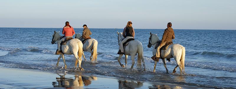 randonnee cheval en camargue