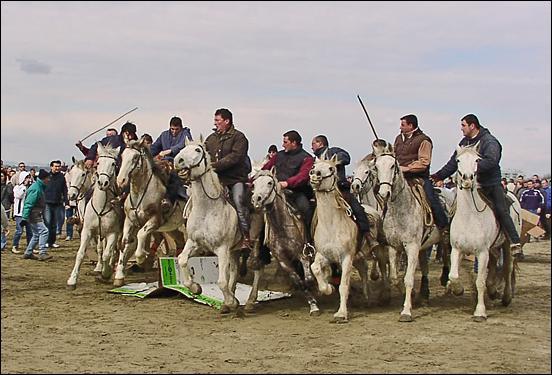 53f6d4defc6f Temps forts - Camargue Promenades, balades a cheval, promenade a ...